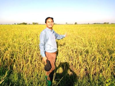 MYANMAR – Paddy Field produces well